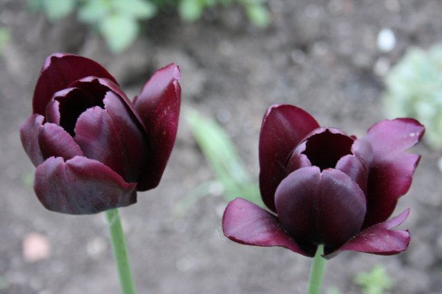 Растения от FILIGERa 957f775d02d3