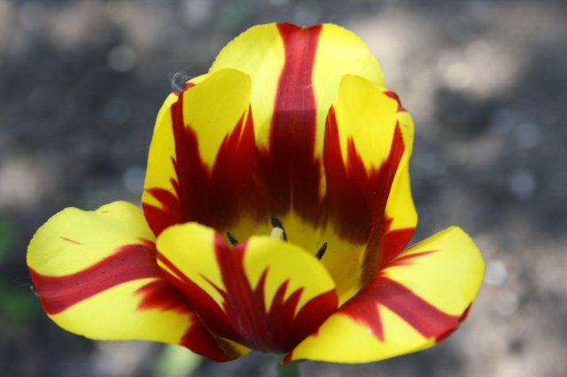Растения от FILIGERa - Страница 2 33bddf0d713d