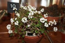 продам семена экзотических растений E06a79e3d955