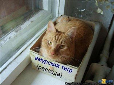 Про новых русских E5a753f6a9b8