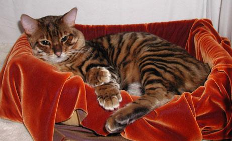 Необычные и редкие породы кошек и собак F4bf8a42f6e0