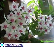 наши домашние цветники 9a84cbf97542t