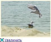 Николаев - город корабелов. A15aebaaa1b9t