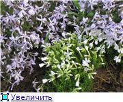 Весенне цветущие 3a5ff20759f1t