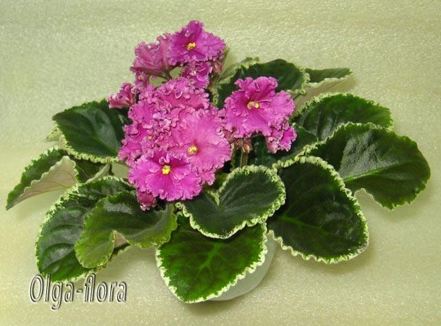 Цветение к Н. Г. (Olga-flora) - Страница 6 4cb9cd7394db