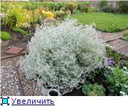 Лето в наших садах - Страница 6 3784ad5f1a8ct