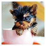 Аватары с животными - Страница 2 A03486c22670