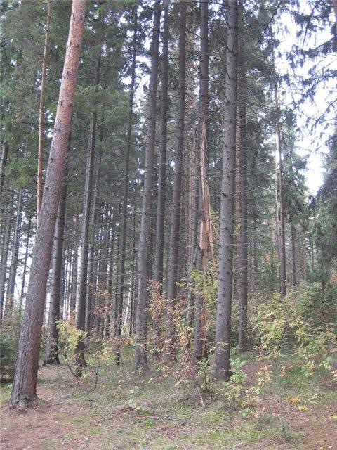 За грибами в Конаково (Тверская область, Волга)! 5aa65de5a95f