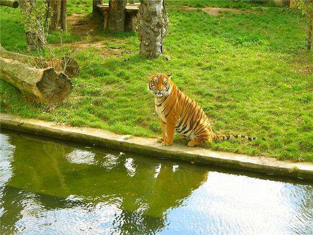 Разные зоопарки 07a23c37e7a5