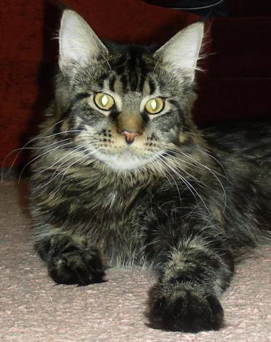 Каталог вяжущих котов A4afbd0a9c41