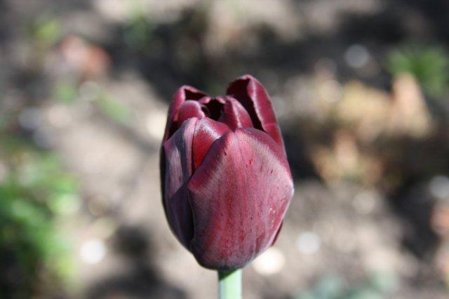 Растения от FILIGERa Ee53253838c7