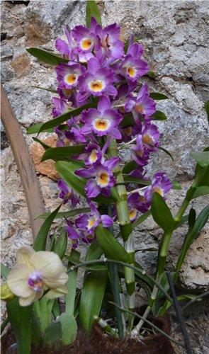 Выставка орхидей Никитского ботанического сада Ed22a2b4f427