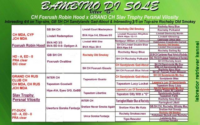 Счастливая солнечная семерочка от Bambino Di Sole 47d7c00fcfbe
