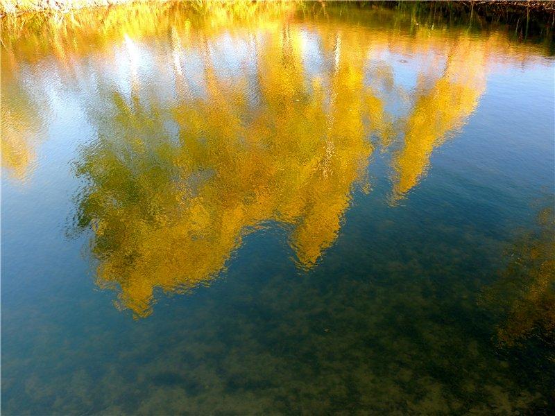 Фотографии цветов и деревьев 65c8b89b14e8