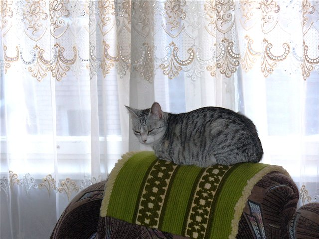 А у меня живет кошка... 17fcaee8669e