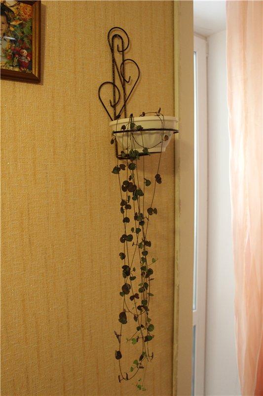 продаю цветы 3dac34656062
