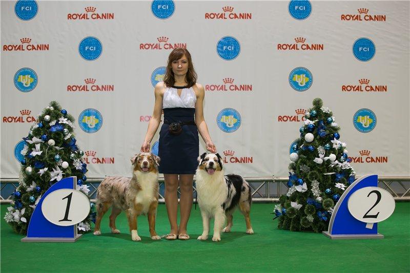Выставочные успехи наших собак - 5 - Страница 5 1b5b2e1d5c3d