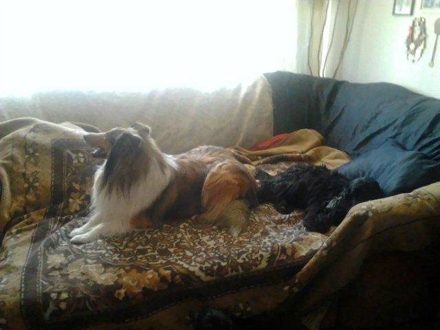 Наши собаки, друзья и гости, кот Мензурка - Страница 30 4cfebb9a6791