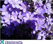 Весна идёт... E6f9a3c01e82t