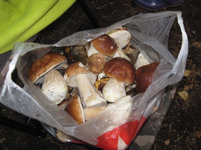 За грибами в Конаково (Тверская область, Волга)! B66d3b910fd0