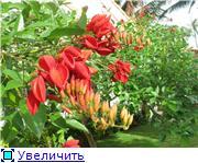 Немного про Вьетнам 17b90b957226t