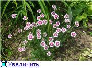 Растения для альпийской горки. 6dbc804f6d3dt