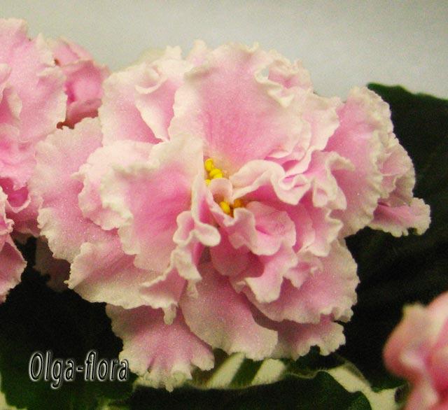 Розовая Пантера   (К. Л. Морев) 9810d7491722