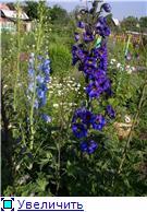 Лето в наших садах - Страница 4 E301ff4dd20dt