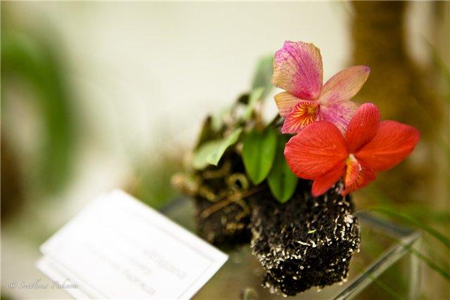 Выставка орхидей в Государственном биологическом музее им. К.А.Тимирязева 1d12f29f237c