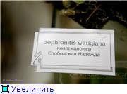 Выставка орхидей в Государственном биологическом музее им. К.А.Тимирязева Fac4dfc60a0et