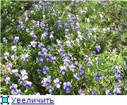 Растения - агрессоры 61a11b3aeb98t