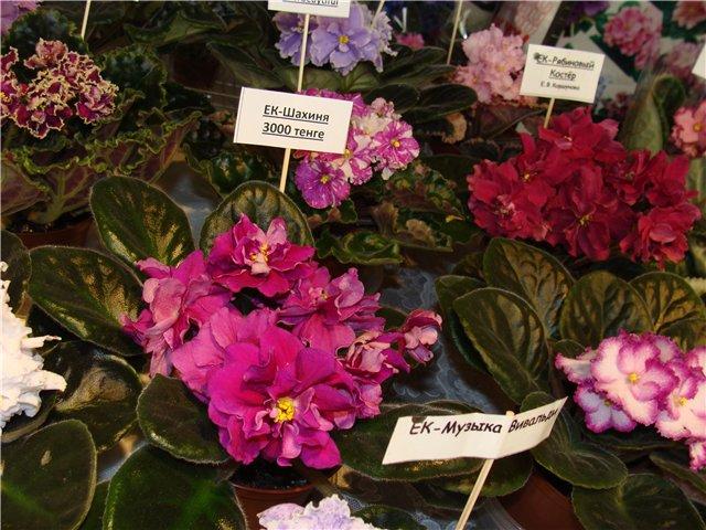 Международая выставка «Цветы.Ландшафт .Усадьба 2010» Астана - Страница 3 12a7d678c25d