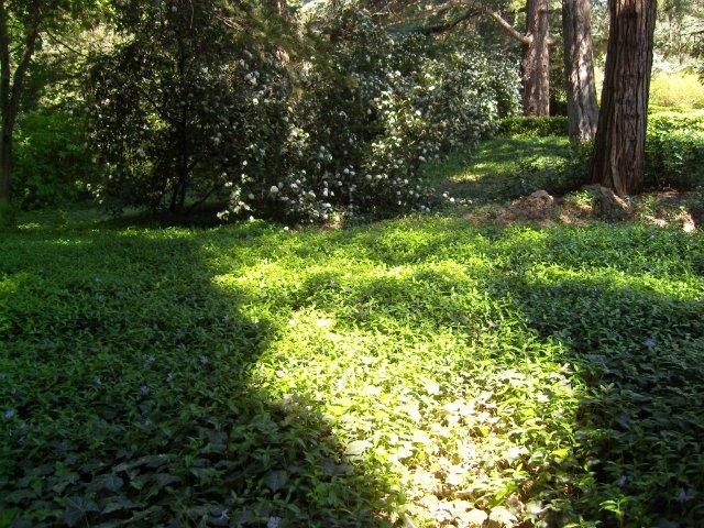 Крым. Никитский ботанический сад. Ac0b4f8f57e1