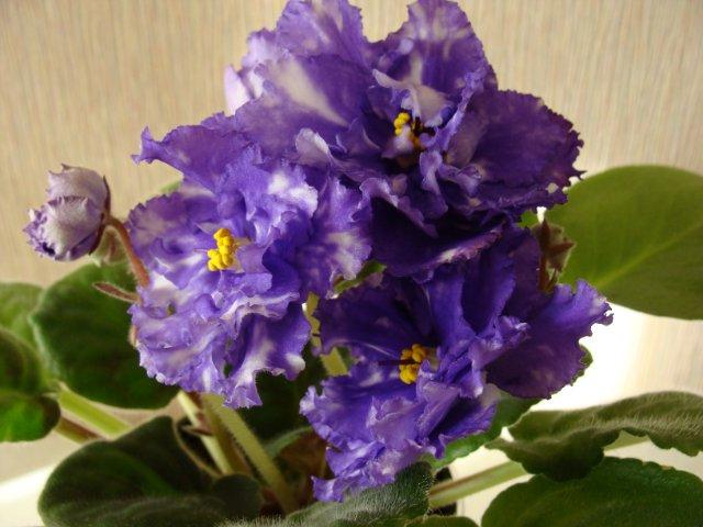 Мои цветочки - Страница 13 622571d3f85a