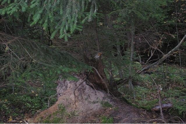 За грибами в Конаково (Тверская область, Волга)! B31b35358633
