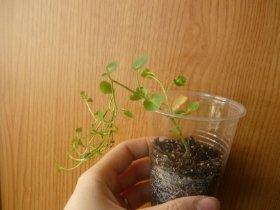 декоротивно-лиственные и красивоцветущие растения - Страница 3 F5b9704b0f4f