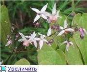 Весенне цветущие 2821d133d0b3t