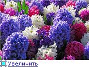 Наши домашние растения - Страница 2 Ab28e4430658t