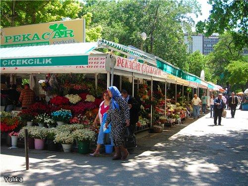 Турция. Солнечный курорт или... Ddcb7c167776