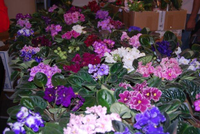 Международая выставка «Цветы.Ландшафт .Усадьба 2010» Астана - Страница 3 75f28c6b3939