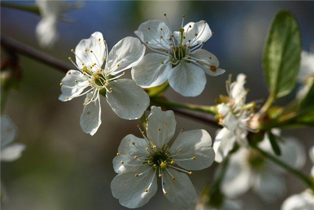 Конкурс Весна-Весна!!! F1c29f175db4