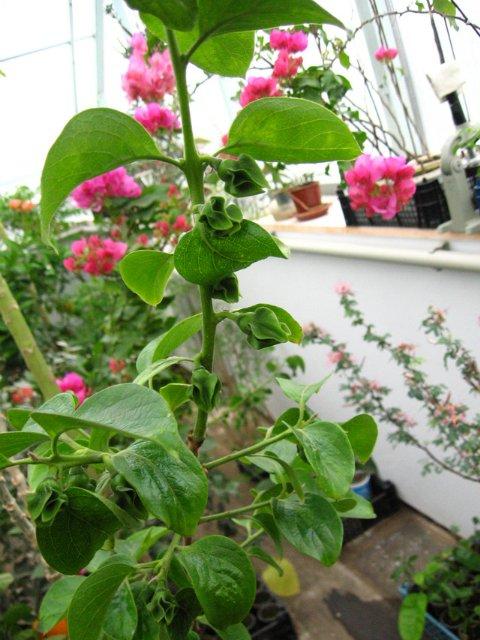 Растения из Нижегородской оранжереи 7e02abf8c22c