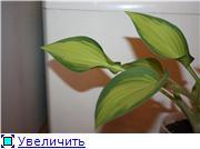 Хосты A294f0a81998t