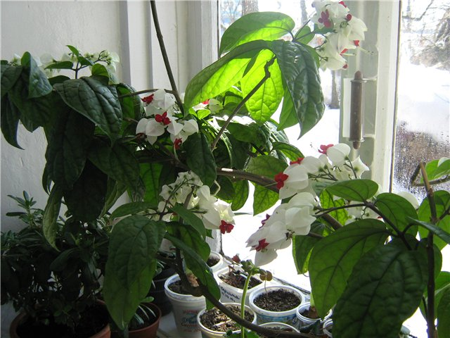 Моё цветочное богатство - Страница 20 F060c35d505c