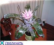 наши домашние цветники - Страница 3 1c61dc88ee1dt