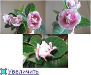 Наши цветочки 535d0562fc4bt