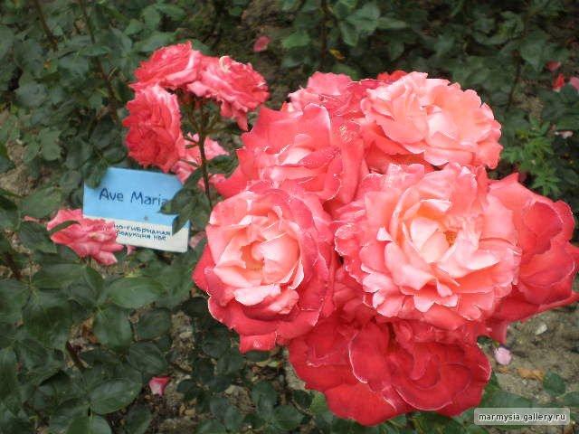 Крым. Никитский ботанический сад. - Страница 2 C5e49af39b12