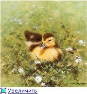Животные, птицы и насекомые 481cc6e49177t