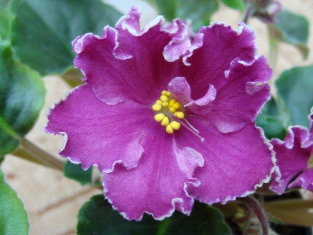 Мои цветочки - Страница 19 04c2b08d1ef4