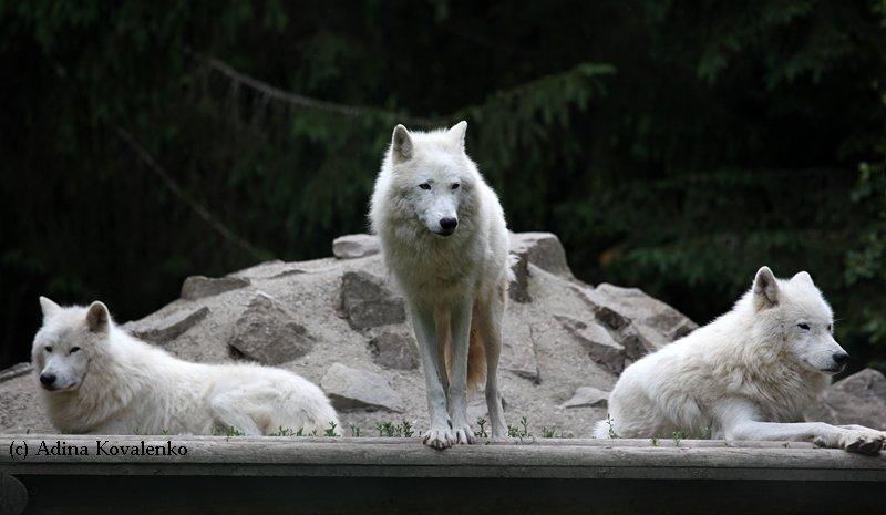 Швейцарский зоопарк 128421936860